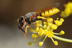 Уничтожитель летающих насекомых