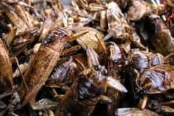 Отрава для тараканов — мелок Машенька и борная кислота