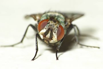 Обработка от мух
