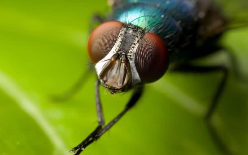 Народное средство от мух