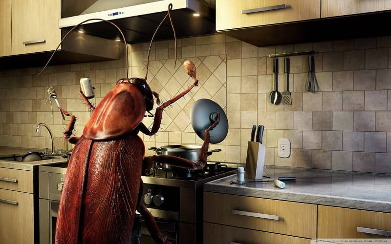 Возможно ли и как избавится от тараканов в квартире навсегда