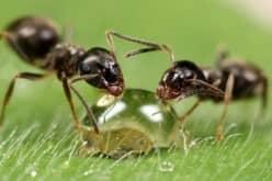 Средство от муравьев в квартире