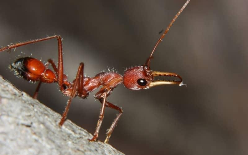 Как бороться с муравьями домашними