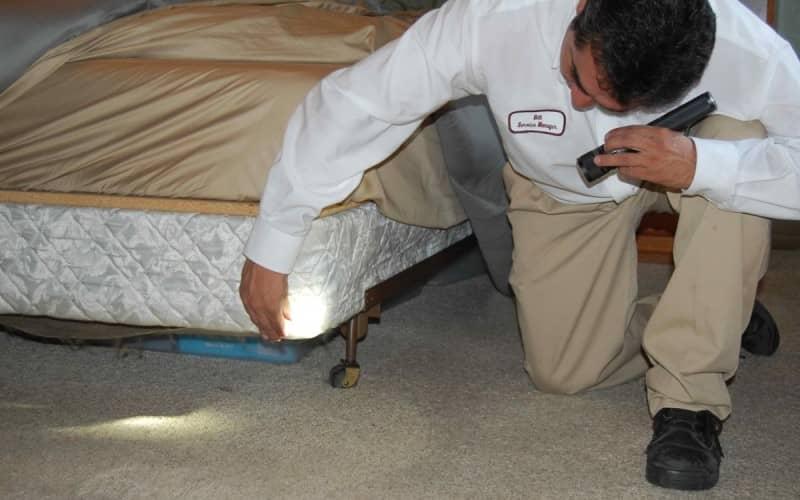 Как бороться с постельными клопами, выбор средств для обработки