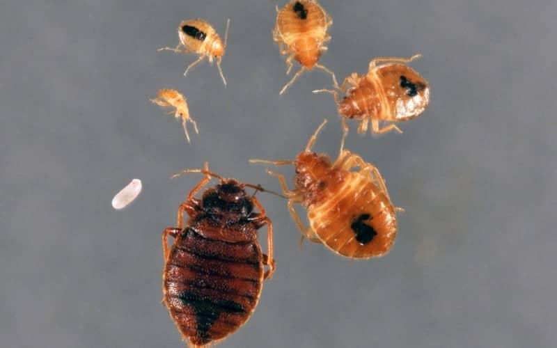 Первые признаки появления и как обнаружить постельных клопов и тараканов в квартире