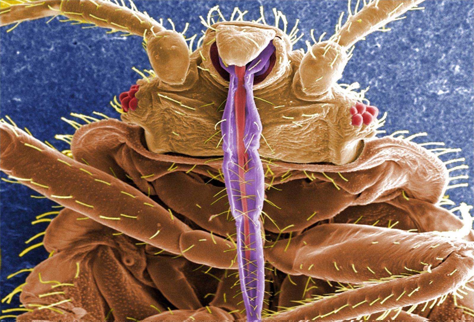 эффективное средство от гельминтов и паразитов