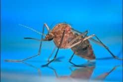 Как действует Раптор на комаров