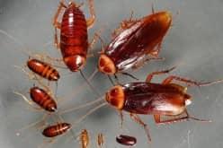 Рекомендуем применение борной кислоты от тараканов в квартире