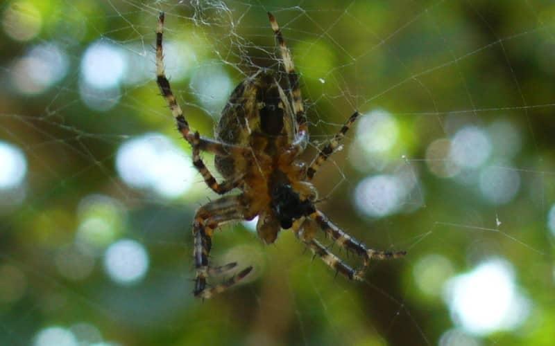 Как бороться с пауками в частном доме