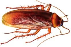 Чем травить тараканов в квартире — какое средство купить