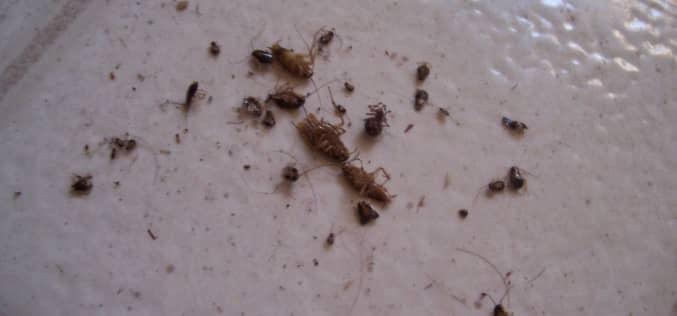 Как специалисты СЭС проводят борьбу с тараканами в квартире