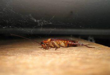 Аллергия на тараканов
