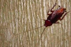 Основные методы дезинфекции тараканов