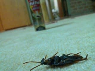 как избавится от тараканов в квартире навсегда