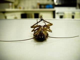 план избавления от тараканов