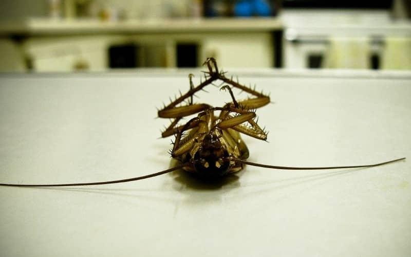 Помогает отпугиватель против тараканов. Воздействие ультразвука на насекомых