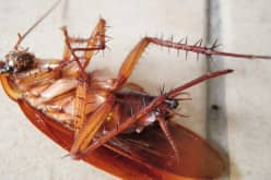 Почему выгодно вызвать фирму для уничтожения тараканов
