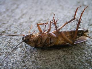 Выведим тараканов из любой квартиры