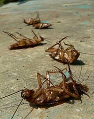 Как бороться с тараканами народными средствами