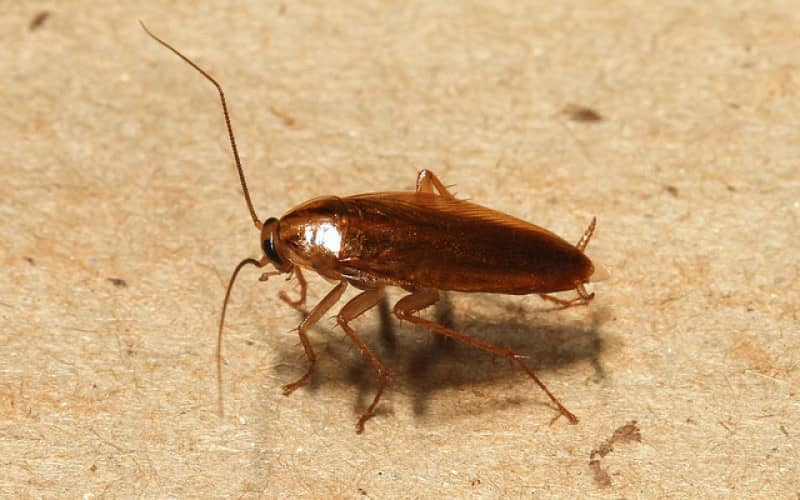 Как предотвратить заражение квартиры тараканами