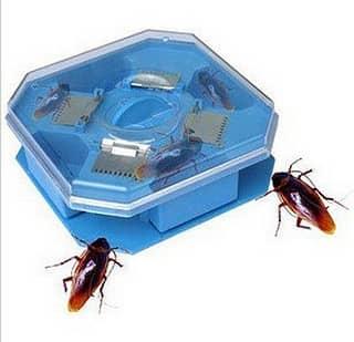 способы как вывести тараканов в квартире