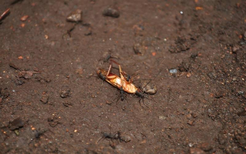 Какую опасность представляют тараканы в квартире