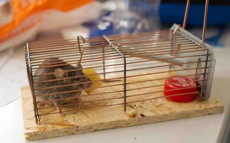 Какие существуют способы дератизации и средства борьбы с грызунами