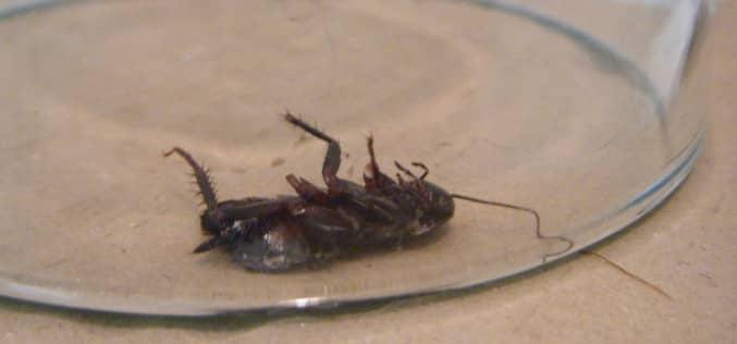Рассказ клиента о том, как он решил самостоятельно избавиться от тараканов