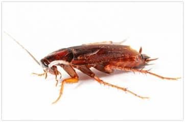 вызвать фирму для уничтожения тараканов