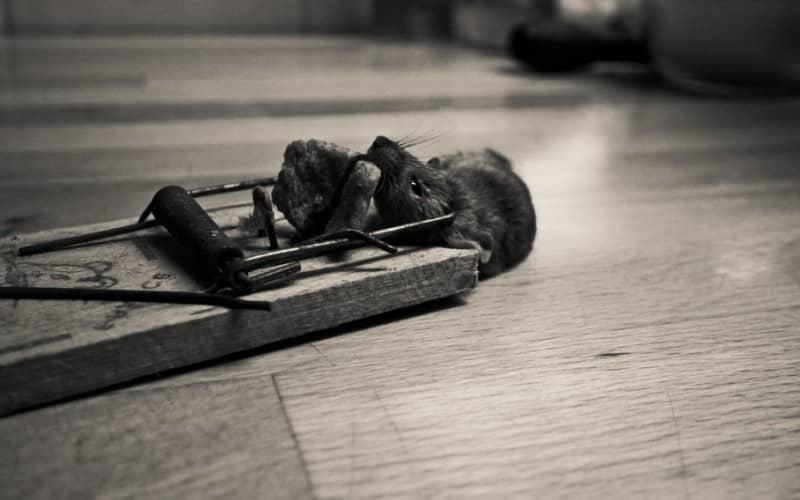 Обзор средств и способов как вывести мышей
