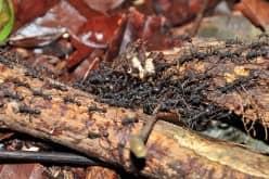 Домашние средства выведения муравьев. 100% гарантия уничтожения