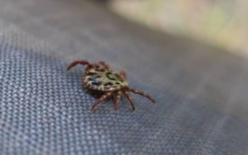 Как вывести комаров в домашних условиях