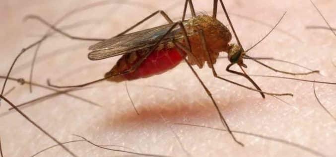 Средство от комаров, какой состав эффективно защищает от комаров