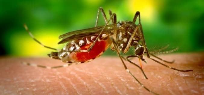 Защита и уничтожение комаров от мухобойки до репелентов