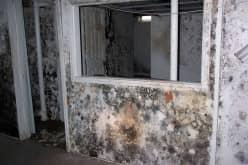 Черная плесень в квартире, как обнаружить и избавиться от очага