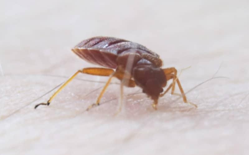 Десять способов избавиться от тараканов и постельных клопов. Часть вторая