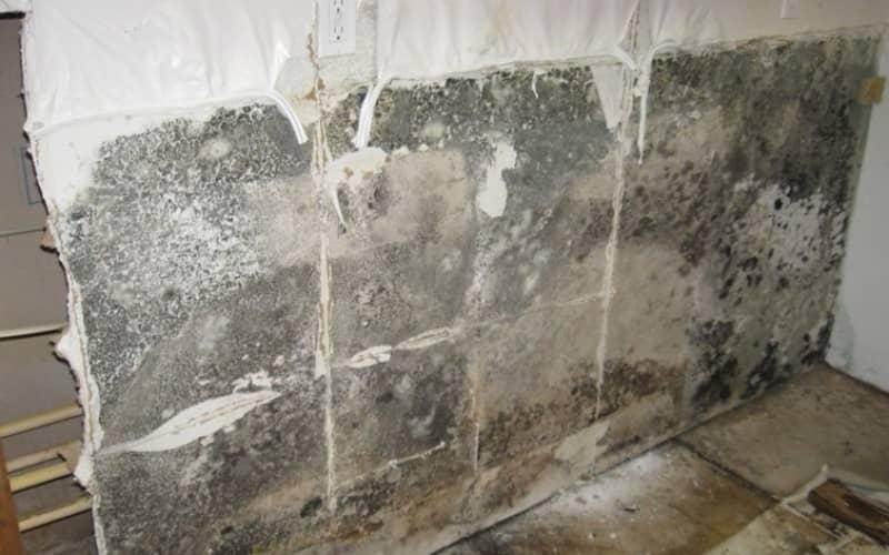 Как избавится от плесени в доме в домашних условиях 911