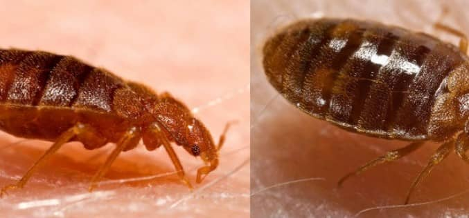 Как не занести клопов — откуда появляются постельные клопы и тараканы. Заражение квартиры насекомыми
