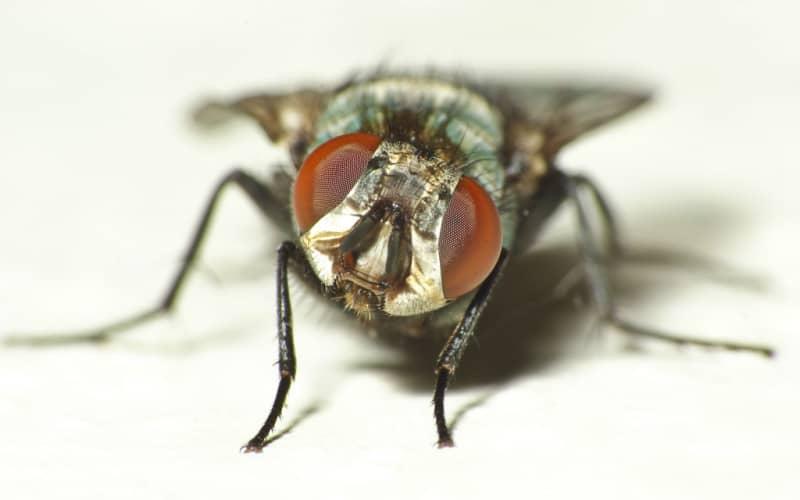 Избавление от мух в квартире