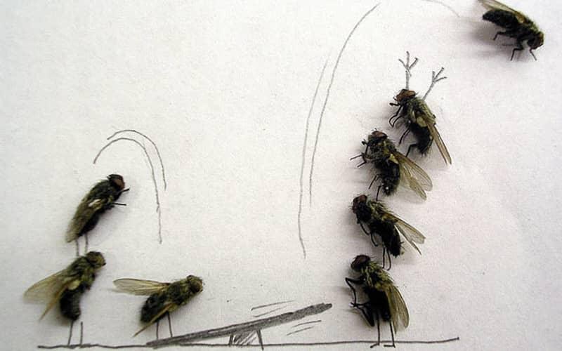 Как сделать липкую ленту от мух