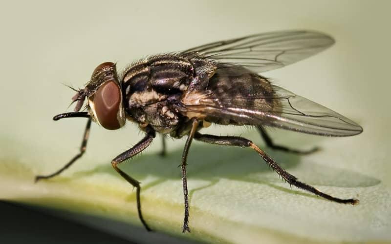Избавляемся от мух