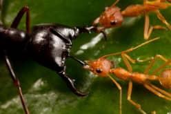 Как бороться с рыжими муравьями в квартире