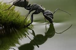 Средство от муравьев в доме