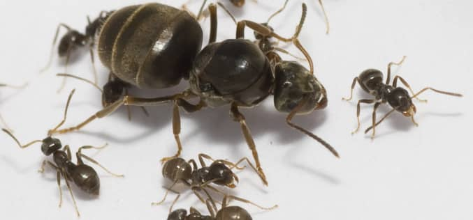 Как бороться с муравьями на даче
