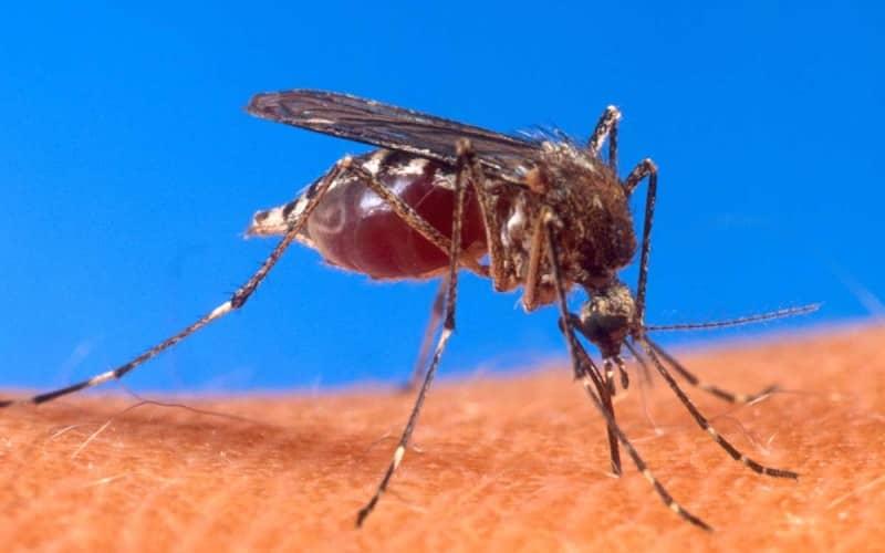 Средство от укусов комаров