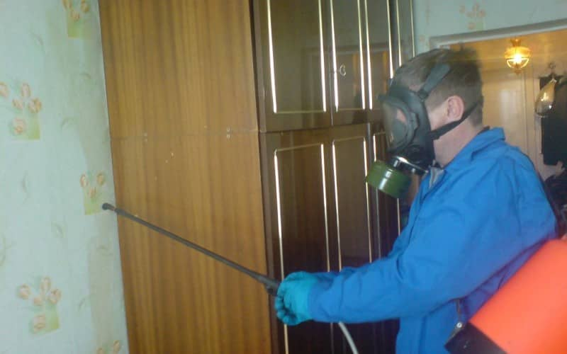 Травление клопов в квартире безопасными методами