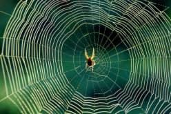 Как избавиться от пауков на даче