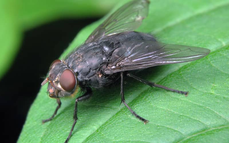 Средства борьбы с мухами