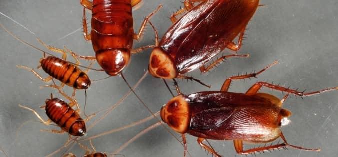 Устраняем возможные причины появления тараканов в квартире