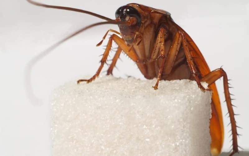 Эффективно избавляемся от тараканов в квартире